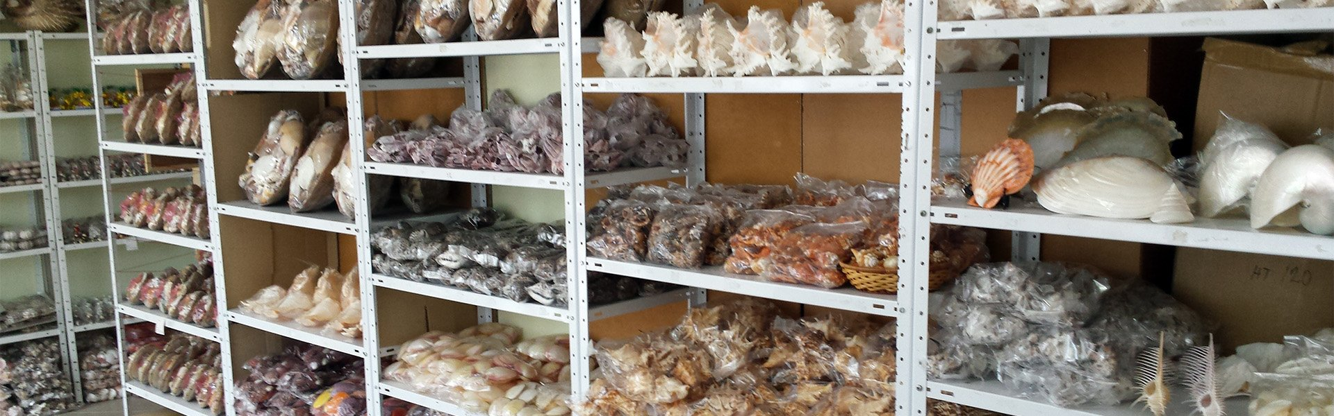Seashells wholesale and retail