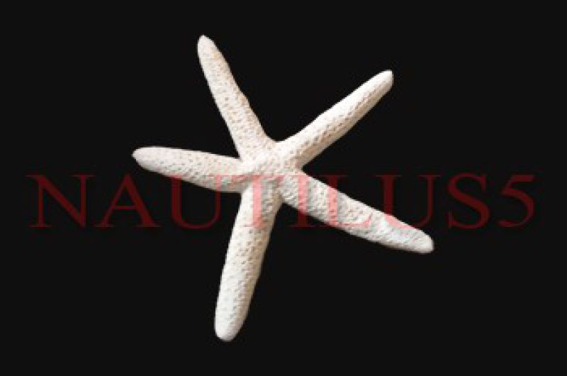 finger starfish 4